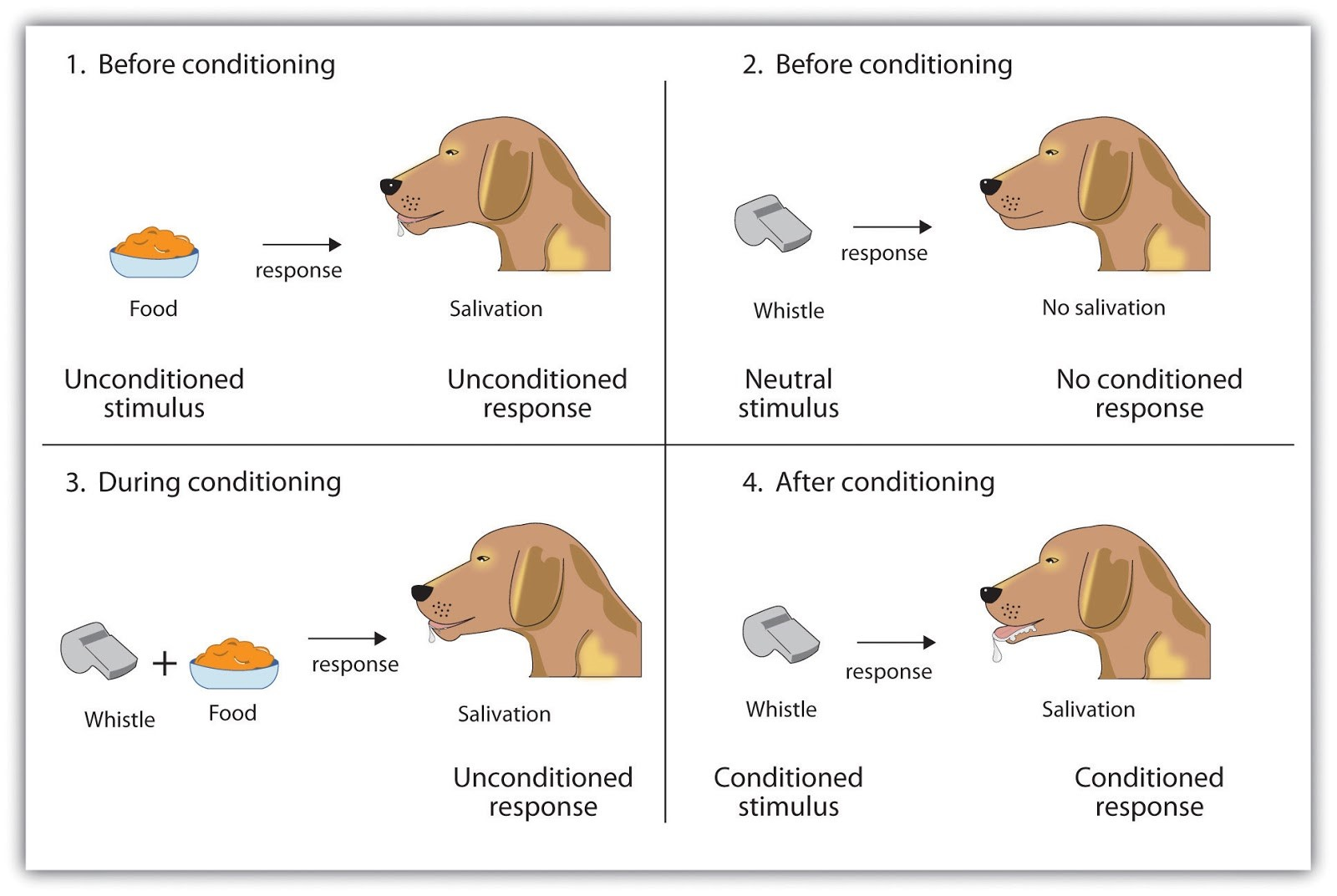 Conditioned responses bdsm